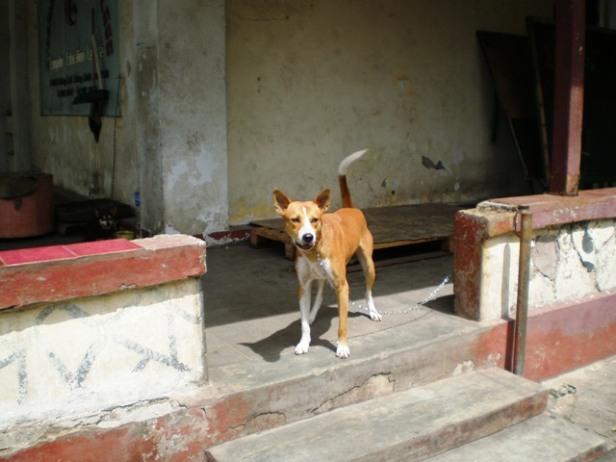 Anjing yang menjaga patung, atau patung menjaga anjing