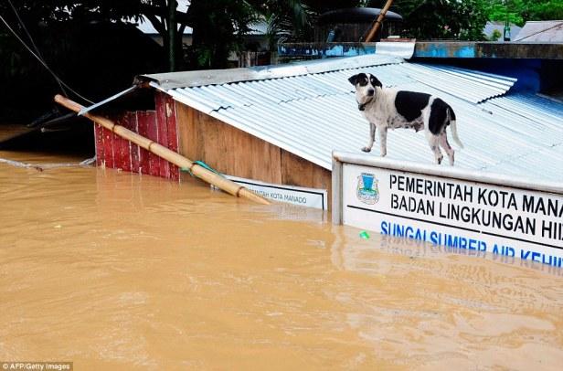 Anjing diatas kantor Lingkungan Hidup